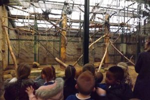 chester-zoo-038