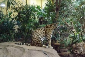 chester-zoo-062