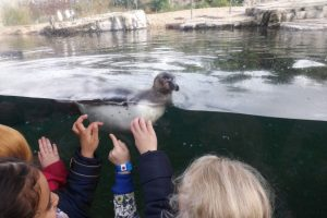 chester-zoo-084