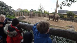 chester-zoo-class-4-014